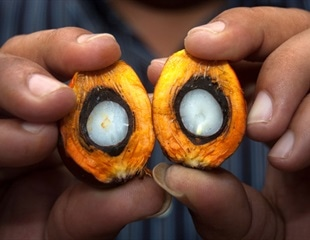 Is Palm Oil Good or Bad in Diet?
