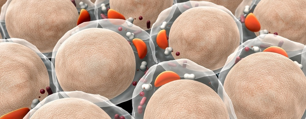 Visualizing Cell Architecture