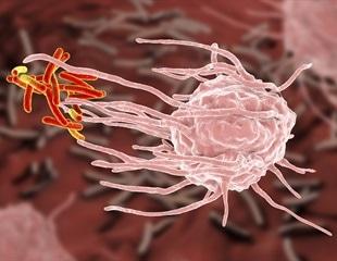 Cells of the Innate Immune System