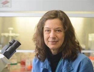 Modifying Oncolytic Adenoviruses to Target Pancreatic Cancer
