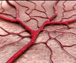 Blood flow defies the laws of fluid dynamics