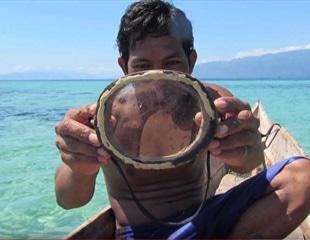 Breathtaking evolution amongst Indonesian tribe - bigger spleens for free-diving