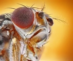 Male fruit flies like sex and alcohol