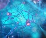 Experts develop biology-based research framework for Alzheimer's