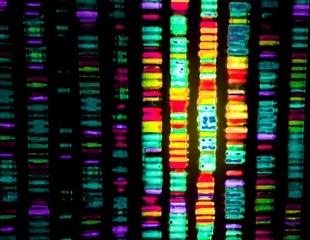 What is Toxicogenomics?
