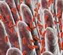 Good bacteria is bad news for atherosclerosis