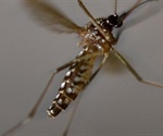 Friendly mosquito could be the next big step in malaria eradication