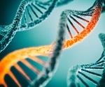 Scientists identify how damaged DNA molecules are repaired inside the human genome