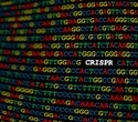 CRISPR/Cas9 gene editing can cause greater genetic damage than previously thought