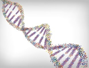 Study shows how 3D organization of genetic material helps perpetuate the species