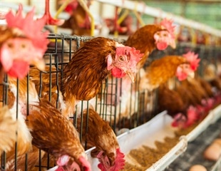 Researchers find another piece of puzzle relating to bird flu viruses