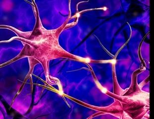 Study uncovers novel details about vulnerability of one brain cell to Alzheimer's