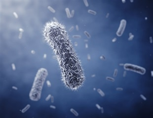 Mechanical stress can interrupt bacteria's ability to survive toxin exposure