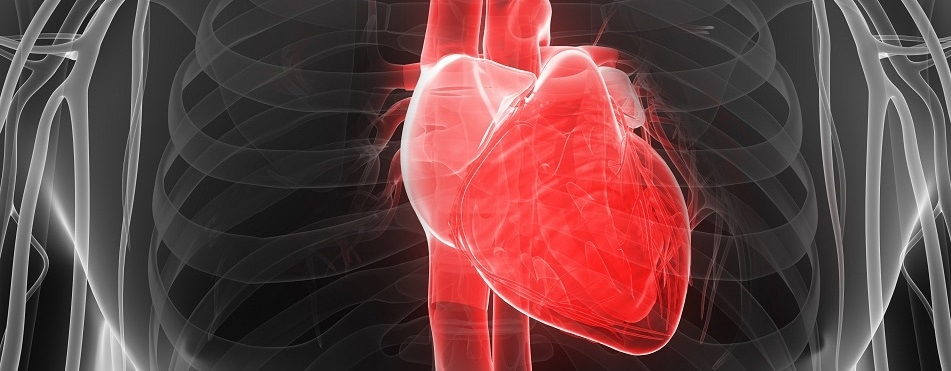 Researchers discover epigenetic mechanism underlying ischemic cardiomyopathy