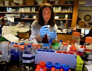 Oxidative Stress Hampers Blood Vessel Dilation in Men