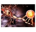 Ground-breaking discovery offers new hope for treatment of Alzheimer's, other neurological diseases