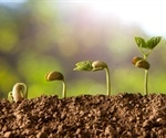NMR and MRI Technology Identifies Factors in Seed Germination