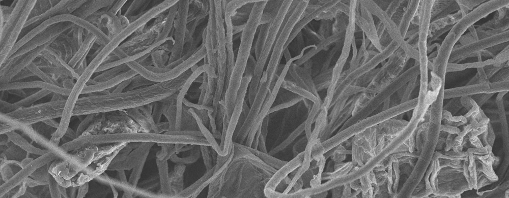 Nanocellulose fibers can reduce fat absorption, research finds