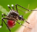 Genetically modified mosquitoes and special bed nets help tackle deadly diseases