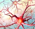 Study sheds light on how brain protein may be involved neurodevelopmental disorders
