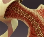 Progenitor cells for human bone and cartilage have been identified