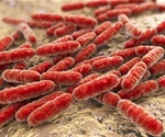 Probiotics do not really help says latest research