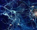 Preclinical Brain Imaging: The use of dMRI