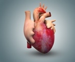 Training heart cells in culture to mimic human cardiac tissue