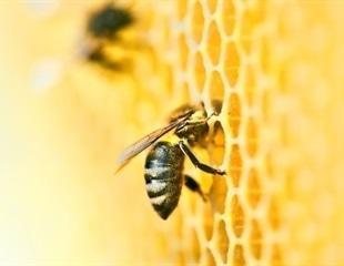 Fighting for Change: Detecting Fraudulent Honey using NMR