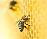 Fighting for Change: Detecting Fraudulent Honey using NMR