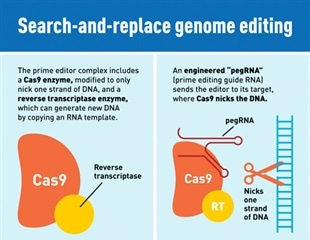"New CRISPR genome ""prime editing"" system"