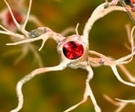 The Other Brain Cells: New Insights into What Glial Cells Do