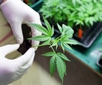 Drug may improve the safety of cannabis use in early pregnancy