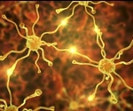 TDP-43 study could speed up the diagnosis and treatment of ALS
