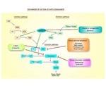 Circulating miRNAs for Myocardial Injury Detection