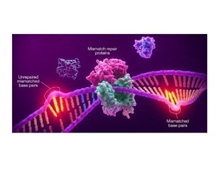 Promega and Merck collaborate to develop MSI companion diagnostic for use with anti-PD-1 therapy