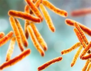 New vaccine against bovine TB