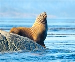Climate change spreading deadly virus in marine mammals