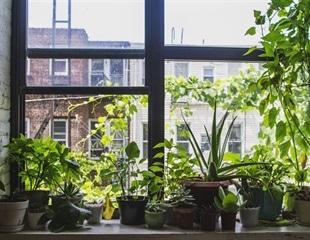 Indoor plants do not improve indoor air quality