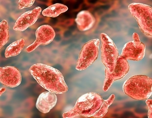 Mycoplasma in Cell Culture: Fighting Back with Rapid Detection Kits