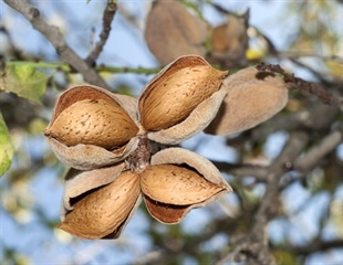 People with peanut allergies avoid tree nuts despite being non-allergic to them