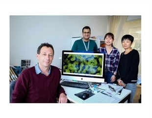 NTU scientists find potential route to disabling viruses causing severe respiratory diseases