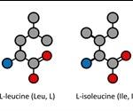 What are Leucine and Isoleucine?