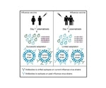 Reduced antibody adaptability may make the elderly more vulnerable to influenza