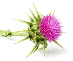 Milk Thistle Health Benefits