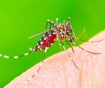 Scientists wean mosquitoes off blood with dieting drugs