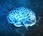The Neocortex and Sensory Perception