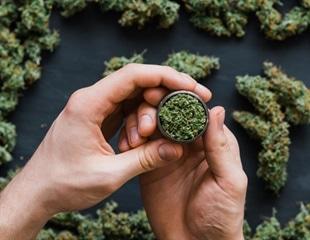 Daily marijuana use may increase risk of psychosis