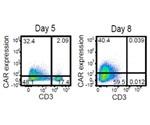 Chimeric Antigen Receptor Expression Evaluation