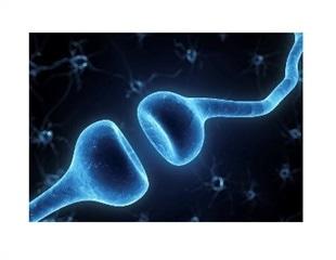 AMSBIO offers new AAV biosensors for neural activity studies in vivo